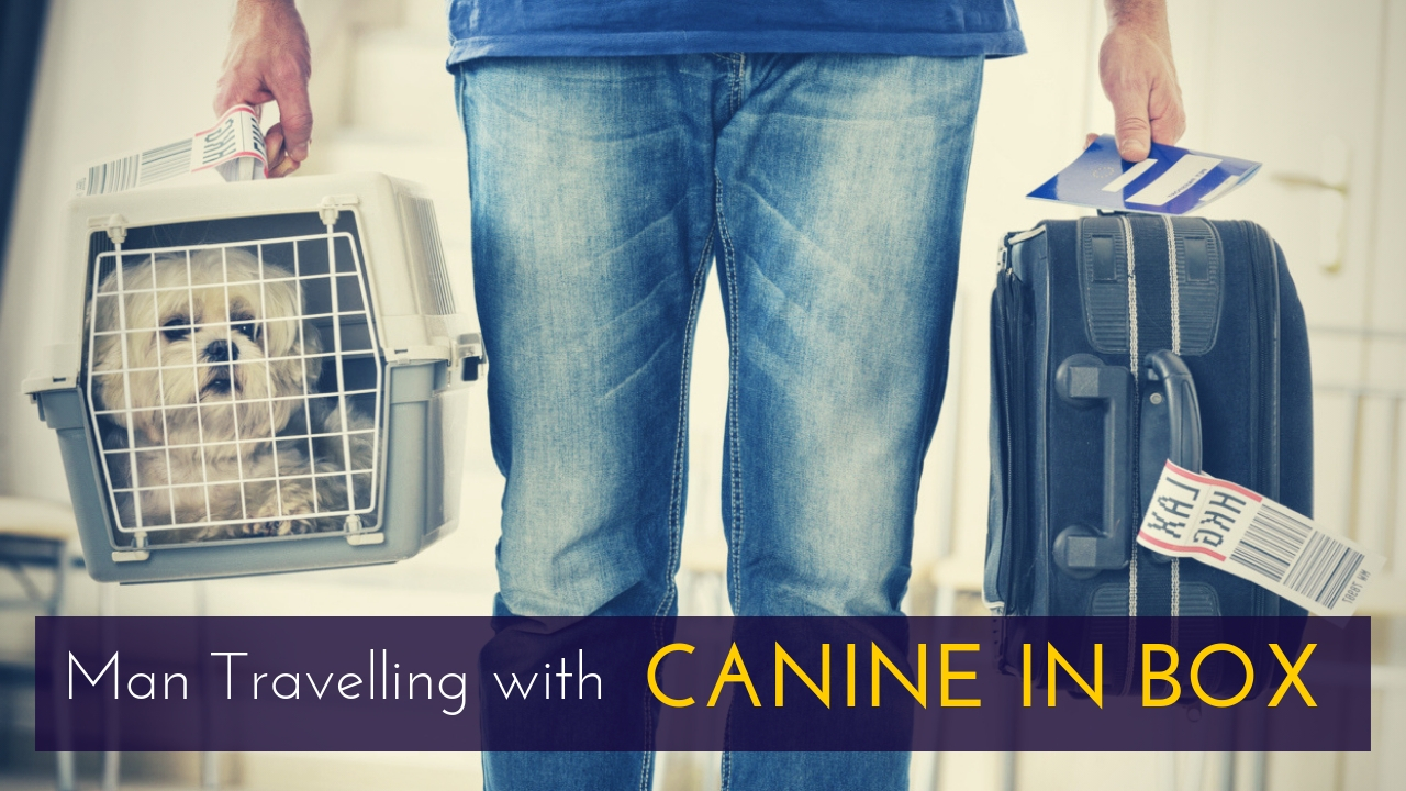 Man Travelling with CANINE IN BOX
