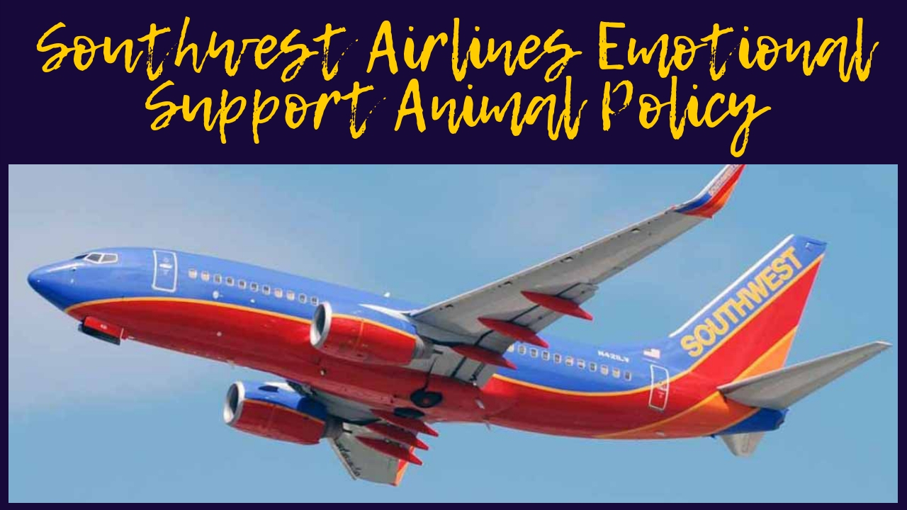 Southwest Airlines Emotional Support Animal Policy
