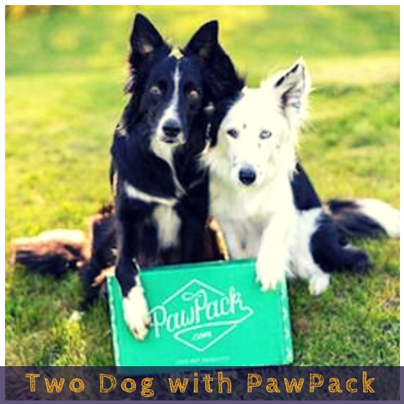 Two Dog with PawPack