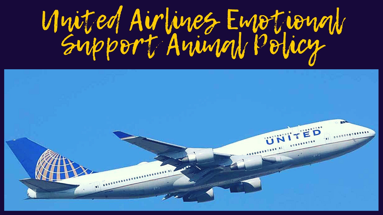 United Airlines Emotional Support Animal Policy