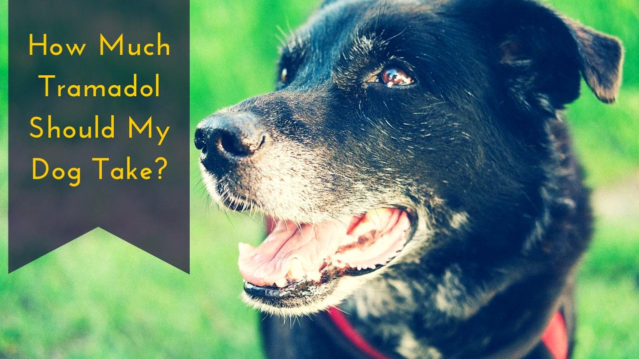 How Much Tramadol Should My Dog Take?