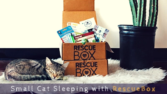 Small Cat Sleeping with RescueBox