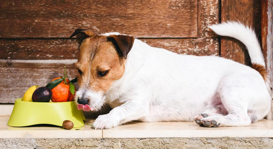 Most fruits are suitable as dog treats