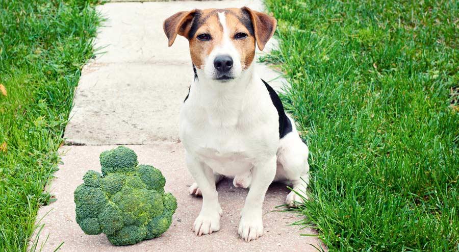 Puppy Treats broccoli
