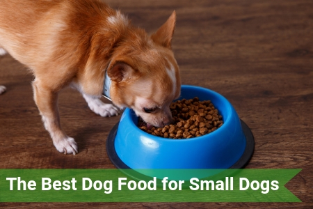 Top Rated Dog Food for Small Dogs