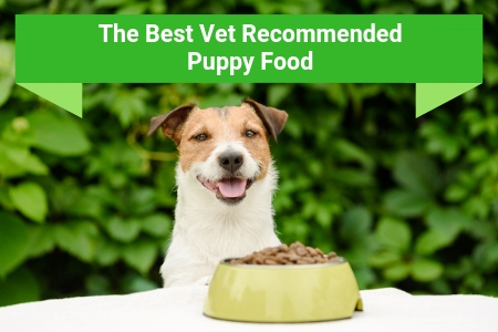 Top Rated Puppy Foods Recommended By Vets