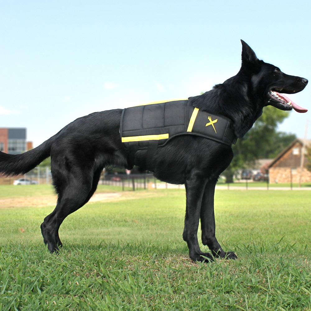 canine wearing xdog vest