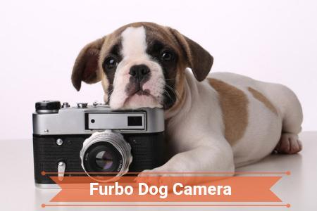 2019 Review of Furbo Dog Camera