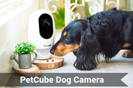 PetCube – Helping Dog Owners Spy On Their Furry Friends