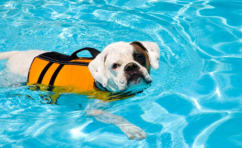 How the Ruffwear Life Jacket Can Help Your Dog