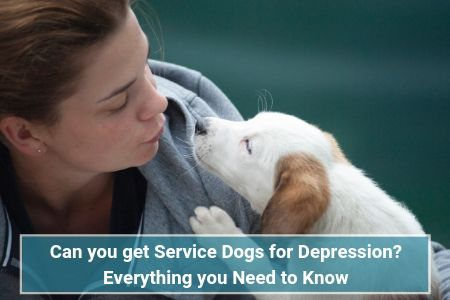 Can you get Service Dogs for Depression? Everything you Need to Know Service Dogs
