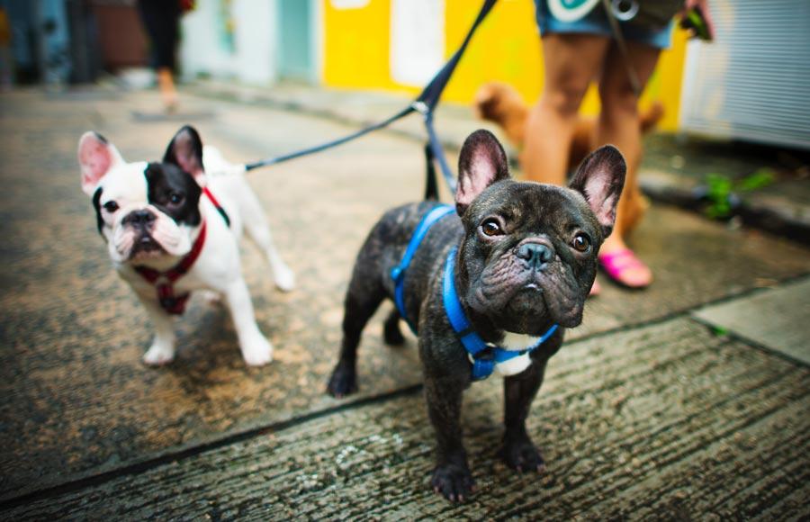 Housebreaking Puppies