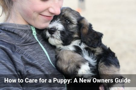 How to Care for a Puppy: A New Owners Guide