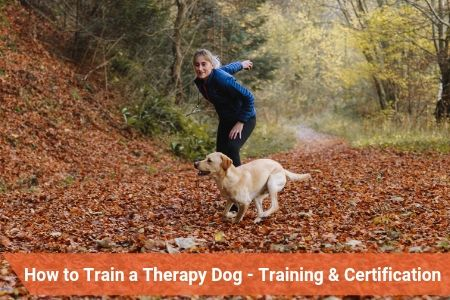 How to Train a Therapy Dog – Training & Certification