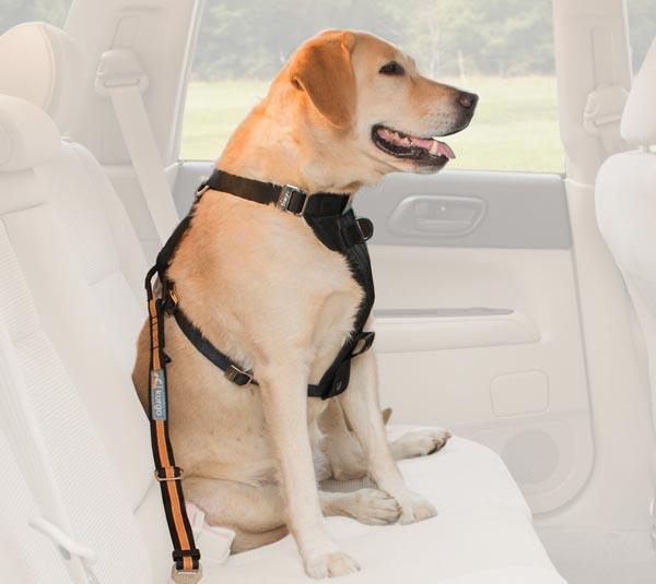 Kurgo Direct to Seat-Belt Tether