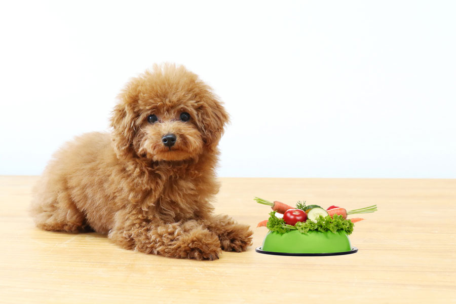 Nutrition for a New Puppy
