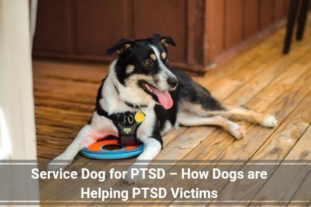 Service Dog for PTSD – How Dogs are Helping PTSD Victims