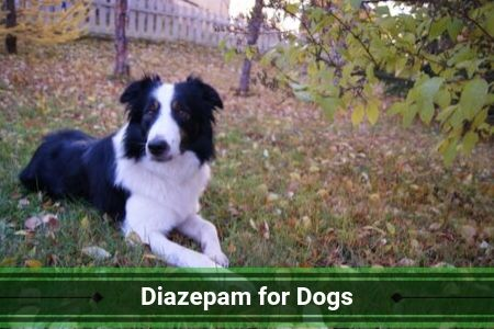 Diazepam for Dogs