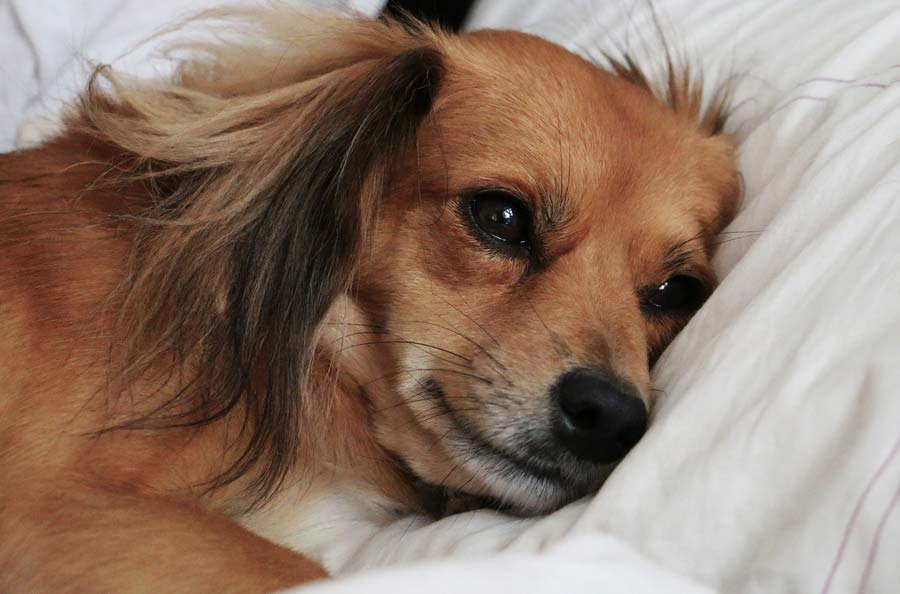How Does Famotidine Work for Dogs