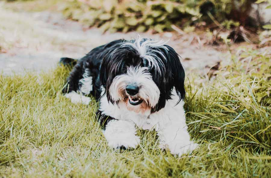 Side Effects of Aspirin for Dogs